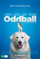 Cesur Köpek Oddball