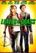 Çifte Bela Leaves Of Grass